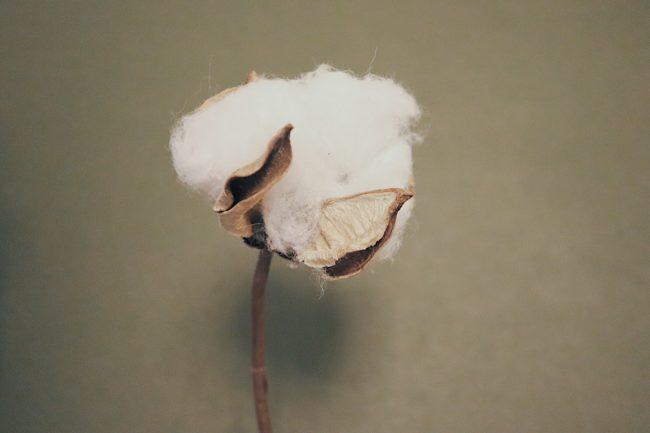 アトピー・敏感肌の人の下着は綿100%が良い理由